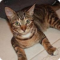Adopt A Pet :: Cash (LE) - Little Falls, NJ