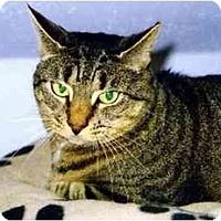 Adopt A Pet :: Grace - Medway, MA