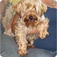 Adopt A Pet :: Luigi - Salem, NH