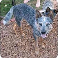 Adopt A Pet :: Maverick - Phoenix, AZ