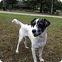Adopt A Pet :: Maggie - Richmond, VA