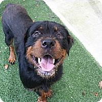 Adopt A Pet :: Turner - Seffner, FL