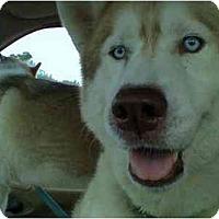 Adopt A Pet :: Bennie - Jacksonville, NC