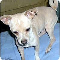 Adopt A Pet :: Stewie - Jacksonville, FL