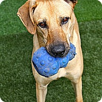 Adopt A Pet :: Ricco - Miami, FL