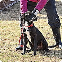 Adopt A Pet :: Barron - Natchitoches, LA