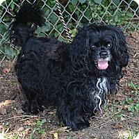 Adopt A Pet :: Tyler - Alpharetta, GA