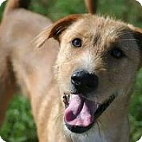 Adopt A Pet :: Arby - Austin, TX