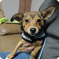 Adopt A Pet :: Gloria - Meridian, ID