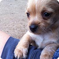 Adopt A Pet :: Agatha - Austin, TX