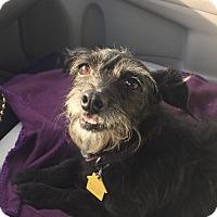 Adopt A Pet :: Ellery - Fresno, CA