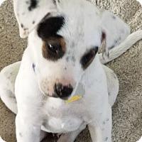 Adopt A Pet :: Mason - Las Vegas, NV