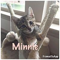 Adopt A Pet :: Minnie - Arlington/Ft Worth, TX