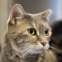 Adopt A Pet :: Snookie - Lincoln, NE