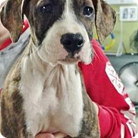 Adopt A Pet :: Mozarella - Toledo, OH