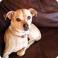 Adopt A Pet :: Pebbles - Ashville, OH