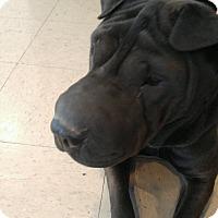 Adopt A Pet :: Dee Dee - Mira Loma, CA