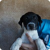 Adopt A Pet :: Hanna - Oviedo, FL