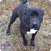 Adopt A Pet :: Roscoe - Southbury, CT