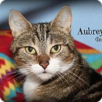 Adopt A Pet :: Aubrey - Glen Mills, PA