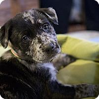 Adopt A Pet :: Amabo - Durham, NC