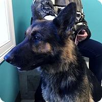 Adopt A Pet :: Dutchess - Wilton, NY