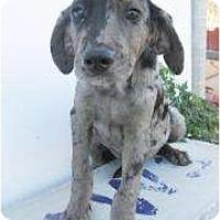 Adopt A Pet :: Brewster - Richmond, VA