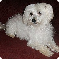 Adopt A Pet :: Gavin - Mooy, AL