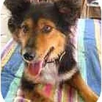 Adopt A Pet :: KATIE - Wakefield, RI