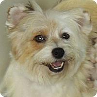 Adopt A Pet :: Skye - La Habra Heights, CA