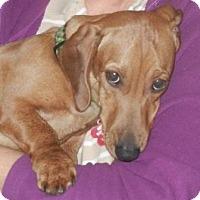 Adopt A Pet :: HANK (Hankie Panky) - Portland, OR