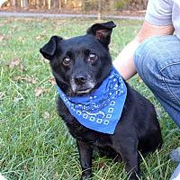 Adopt A Pet :: Bonnie - Mocksville, NC