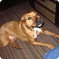 Adopt A Pet :: Bear - River Falls, WI