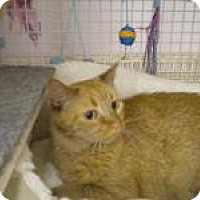 Adopt A Pet :: Baby Girl - Bridgeton, MO