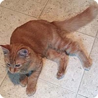 Adopt A Pet :: Pigpen - Merrifield, VA