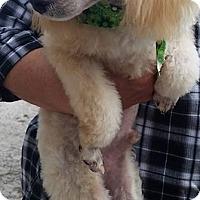 Adopt A Pet :: Speedy - Gainesville, FL