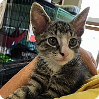 Adopt A Pet :: Weston - Island Park, NY