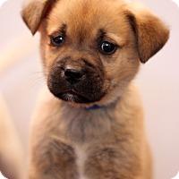 Adopt A Pet :: Key Largo - Waldorf, MD