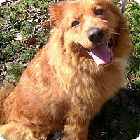 Adopt A Pet :: Baby - Fennville, MI