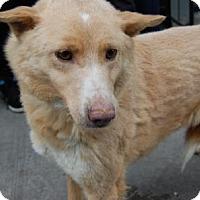 Adopt A Pet :: Paulie - Brooklyn, NY