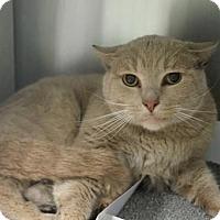 Adopt A Pet :: Meow Meow (foster care) - Philadelphia, PA