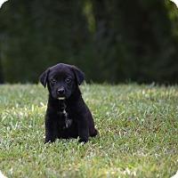 Adopt A Pet :: Anna Claire - Groton, MA