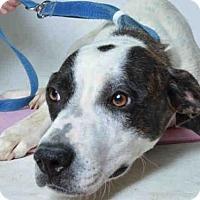 Adopt A Pet :: ALICIA - Ukiah, CA