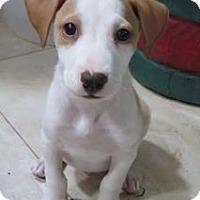 Adopt A Pet :: Kay - Houston, TX