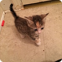 Adopt A Pet :: Stormie - Garner, NC