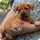 Adopt A Pet :: Kentucky (8 lb) Video!