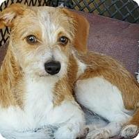 Adopt A Pet :: Alan - Scottsdale, AZ
