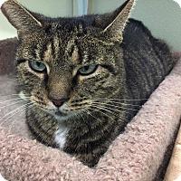 Adopt A Pet :: Nora - Westbury, NY