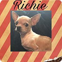 Adopt A Pet :: Richie - WAGONER, OK
