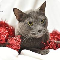 Adopt A Pet :: Trixie - St. Louis, MO